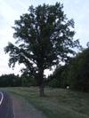 Gnarly_tree_5k